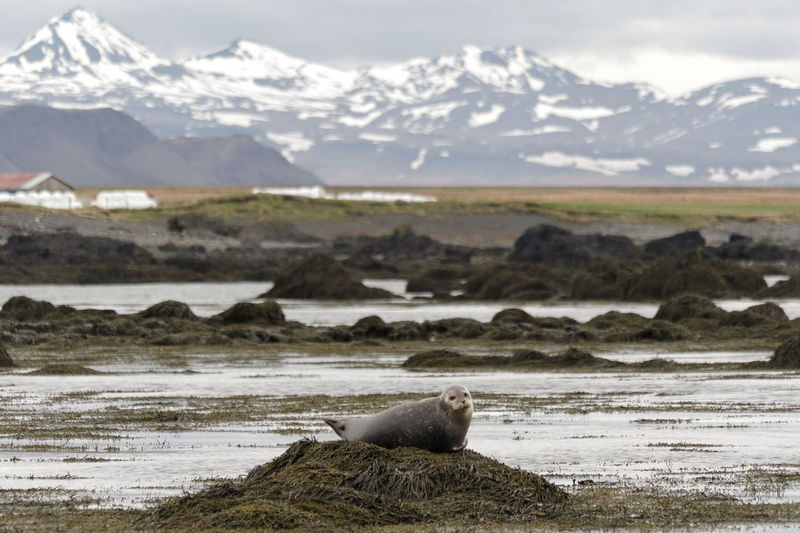 Seal relaxing on land