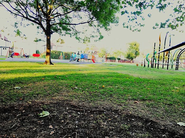 Grass Tree Park - Man Made Space Playground Outdoors Green Color Horizontal Nature Day No People Outdoor Play Equipment Schoolyard