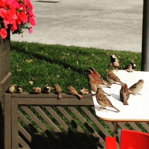 Birds гопота семкиесть