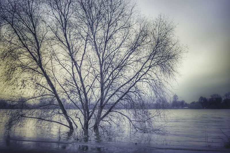 Überschwemmung Flodded Area Outdoors Water Nature Perfect Landscape Perfect Nature Wonderful World Of Photography 🤗 Cologne Rheinufer EyeEm Nature Lover Eye4photography  EyeEm Best Shots EyeEm Gallery EyeEm Selects Wonderful Sky Bare Tree Foggy Tranquility Countryside Calm Tranquil Scene Cold EyeEmNewHere