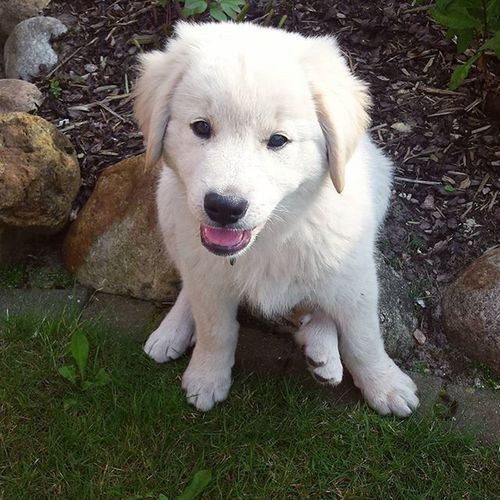 Dog Baby Cute Max Maxiking Love Cutie Adorable Heart Kuwatsch Welcome Iloveyou Sosüß Herzig Herznase