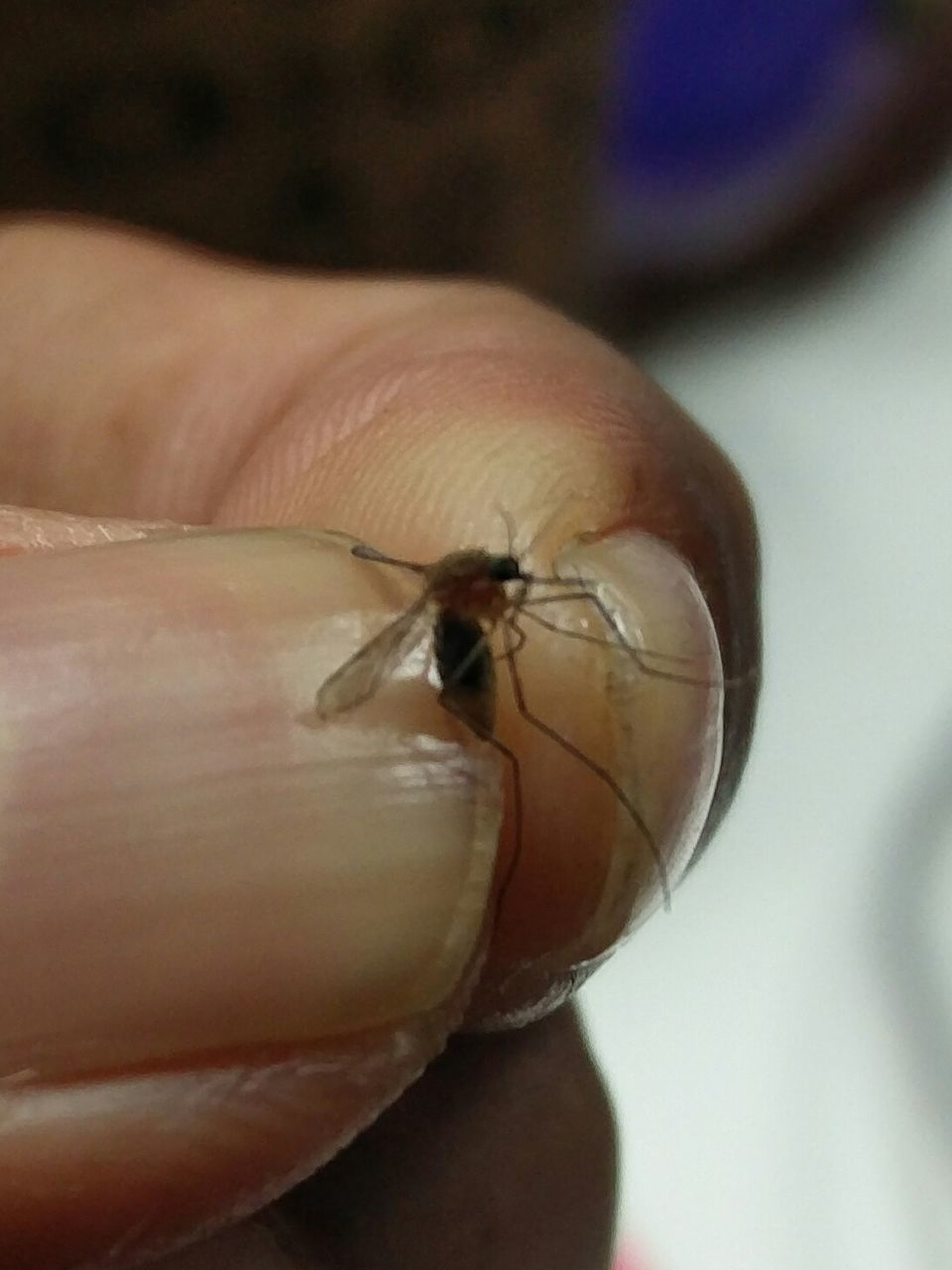 Cropped Image Of Person Holding Dead Mosquito