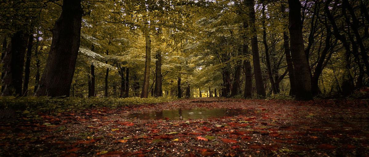 Colors Of Autumn TreePorn Autumn Autumn Colors Nature_collection Landscape Colors
