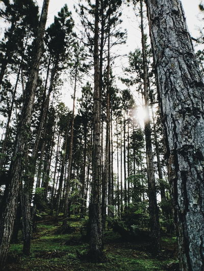 The Week on EyeEm Eyeem Philippines OPPO F7 Phone Photography Tree Tree Area Forest Tree Trunk Branch Sky