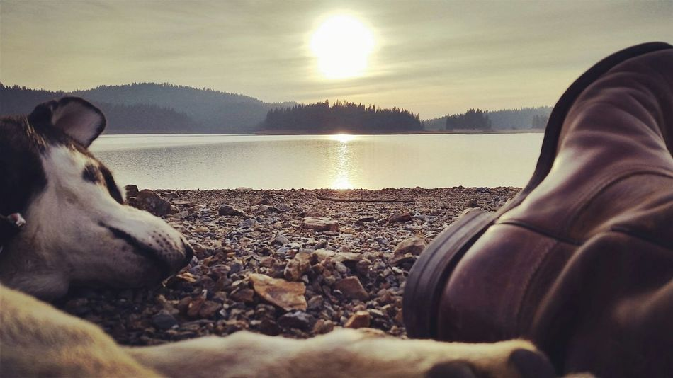 Boots Explore The World Scenery Vscocam VSCO Siberian Husky Husky OpenEdit Outdoors Nature