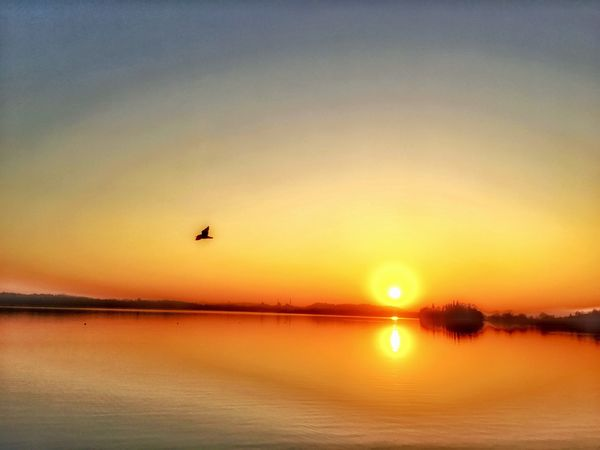 Fly. Nature Outdoors Beauty In Nature Tranquil Scene No People Animal Themes Sky Sun Water Lake Sunset Reflection Flying Bird EyeEm Nature Lover From My Point Of View in Brianza