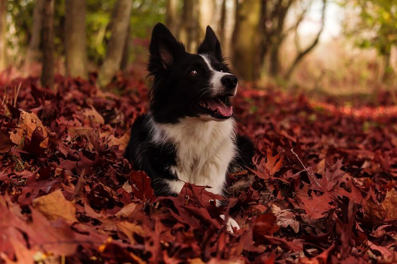 Pets Domestic Animals Dog One Animal Animal Themes No People Nature Leaf Plant Outdoors Autumn Autumn Colors Canon Canonphotography Canon 550 D
