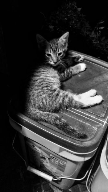 Domestic Cat One Animal Feline Mammal No People Outdoors Kitten Cat Light And Shadow Black And White Monochrome Animal Outside Cats