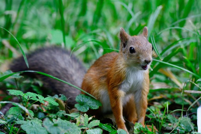 Close-up of squirrel on plant