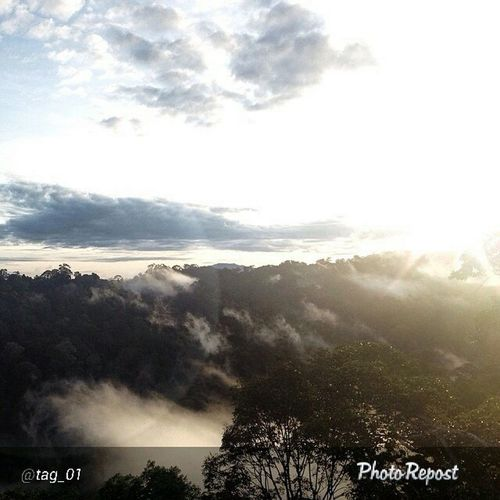 """By @tag_01 """"Good Morning On top of the Temburong canopy with the Sunrise. How was your morning? Weirdthingsido ILoveMyJob """" via @PhotoRepost_app HappyBrunei"""