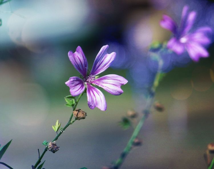 Purple Purple Flower Purplelove Bokeh Nature