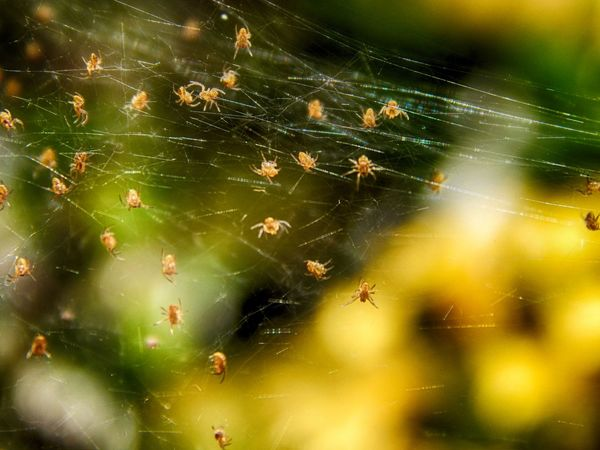 Baby Spiders Beauty In Nature Close-up Complexity Fragility Happy Halloween Nature Outdoors Spider Spider Web Web