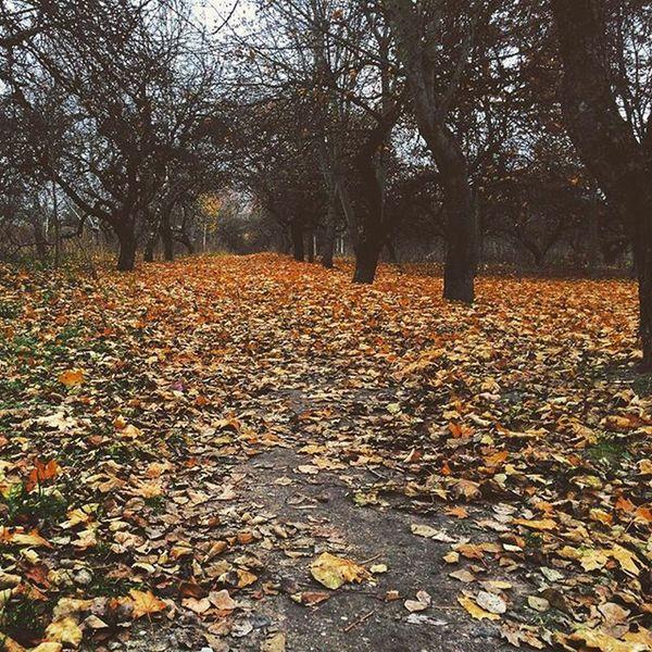 🍂🍂🍂🍂🍂🍂🍂🍂🍂 November Autumn осень Минск ноябрь вівторок листопад