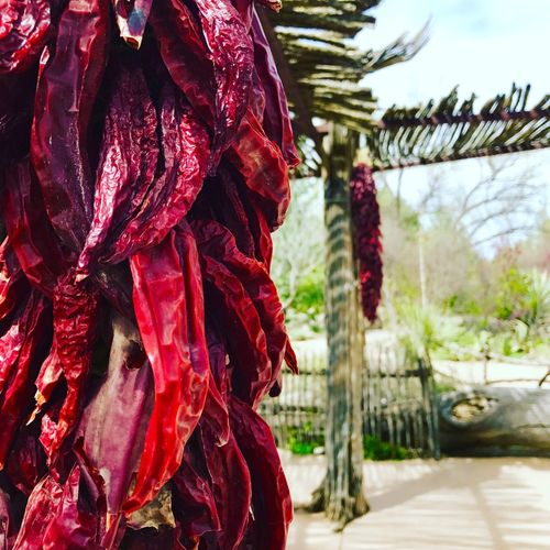 Newmexico Outdoors Redchile Ristra