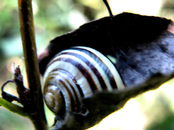 Animal Themes Close-up Detail One Animal Selective Focus Snail Zoology