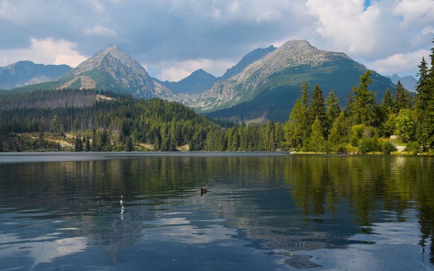 Beautiful view of Strbske Pleso lake with mountain range and forest shore reflection in calm water Animals In The Wild Outdoors Water Mountain Reflection Lake Beauty In Nature Scenics - Nature Mountain Range Cloud - Sky Sky Tranquil Scene Tranquility Waterfront Tree Nature Day Non-urban Scene Plant Animal Strbske Pleso Mountain Lake Europe Summer Travel Destinations Travel Beauty In Nature