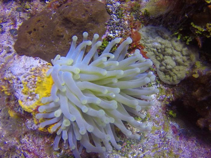 Cozumel Diving Mexico Coral Dive Divingphotography Sea Sea Anemone UnderSea Underwater