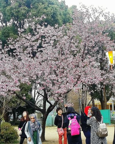 Pink Blossoms Ueno Park Tokyo Japan Tokyoflowers2016 Cherry Blossoms Uenopark2016 Tokyospring Tokyospring2016 Tokyouenospring2016 EyeEM Tokyo EyeEm Japan EyeEm Gallery Streetphotography Eyeem Streetphotography Eyeem Uenopark 2016 Ueno Park Spring 2016