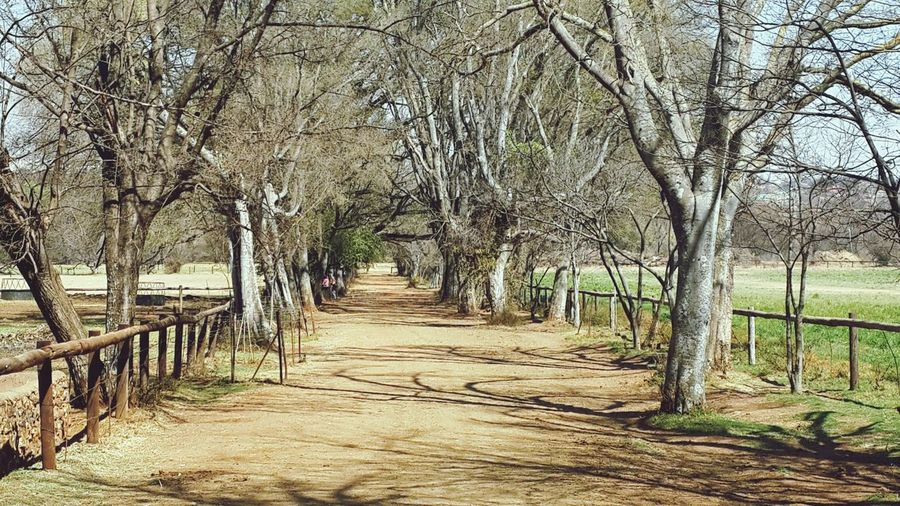 Nature walk at Irene Dairy Farm. South Africa. Tree Day The Way Forward No People Outdoors Nature Bare Tree Beauty In Nature Sky Vacations Branches Shadows & Light Walkway No Leafs Winter Trees Winter Morning Quiet Moments