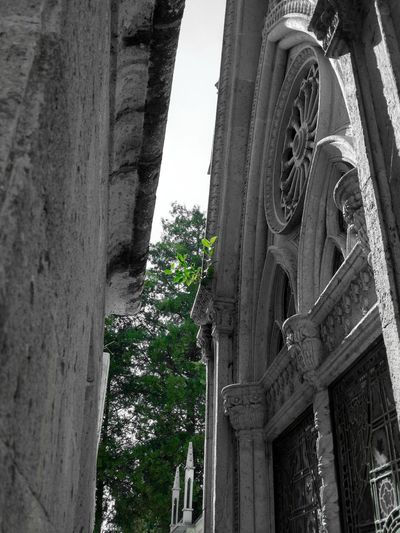 Building Exterior Architecture Built Structure Tree No People Low Angle View Outdoors Day Place Of Worship Wisdom Of The Trees Nature Rising From My Point Of View Gothic Architecture Window Memories