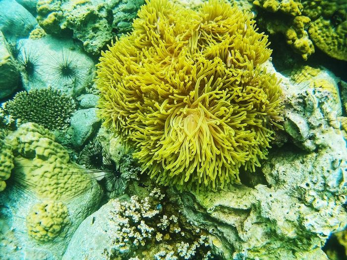 coral Growth