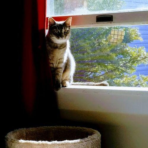 Kitten Watching