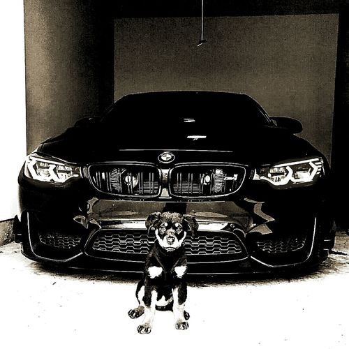 Car Turntable Archival Old-fashioned Indoors  No People Gramophone Day Dog Dogs Bmw M3 M5e60 Black And White Blackandwhite Black Dog❤