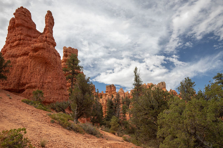 Red Canyon - the smaller brother of Bryce Canyon Cloud - Sky Beauty In Nature Tree Tranquil Scene Non-urban Scene Scenics - Nature Nature Outdoors Utah Red Canyon USA Rock Formation Rock Rock - Object Tranquility Solid Physical Geography Mountain Land No People Environment Formation Eroded Climate Arid Climate