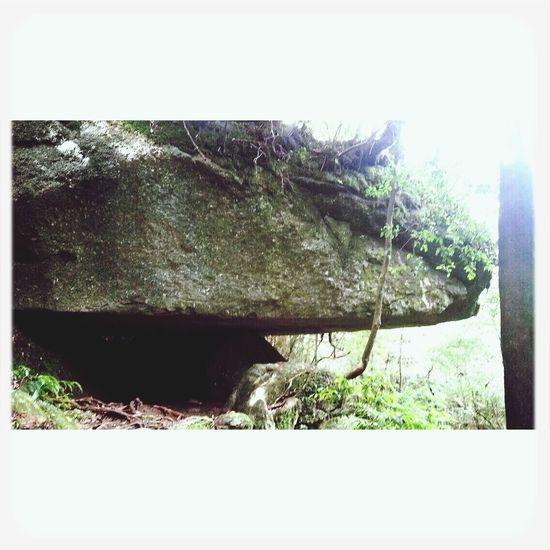 屋久島 (Yakushima Of The World Natural Heritage) Nature Rocks Fromthetrails