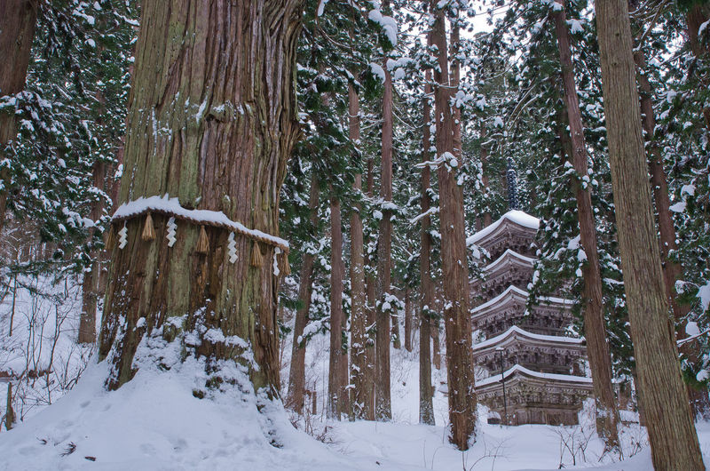 Snow Tree Cold Temperature Winter Land Plant Tree Trunk Trunk Forest Tranquility Beauty In Nature Tranquil Scene Nature Covering No People Day Non-urban Scene Scenics - Nature Field Outdoors WoodLand Snowing Winter Japan Photography Japanese Temple
