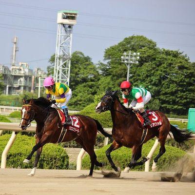 園田競馬 リアファル クロスクリーガー 兵庫チャンピオンシップ