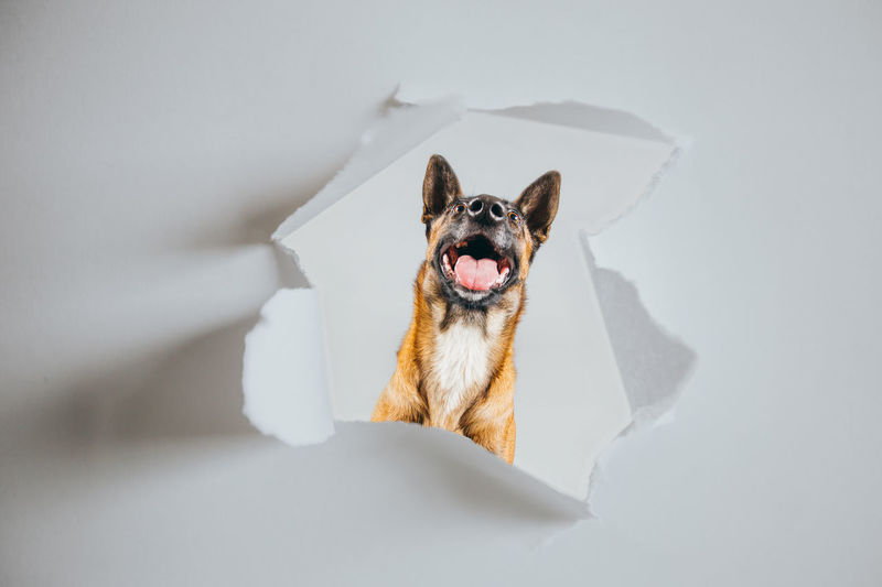 High angle view of dog over white background