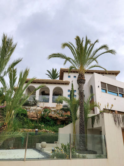 Palm tree by swimming pool against building
