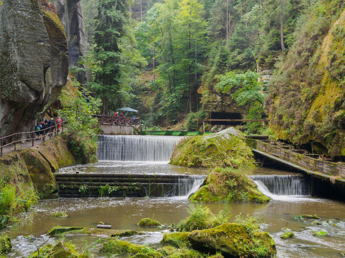 View of the Gorges in Hrensko Water Plant Tree Forest No People Beauty In Nature Land Scenics - Nature Nature Day Tranquility Outdoors Rock Flowing Water Flowing Gorge
