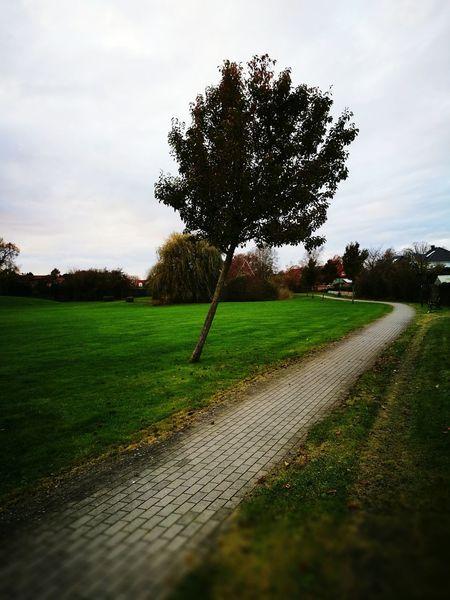 Tree Nature Outdoor Landscape Grass Cloud - Sky No People Sky Day Single Tree