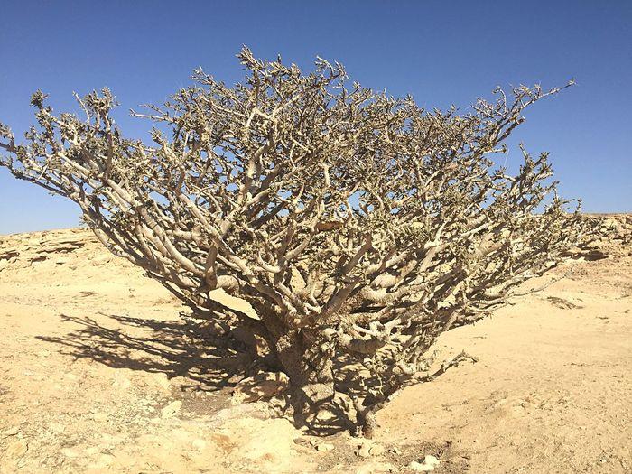Knarled Trees