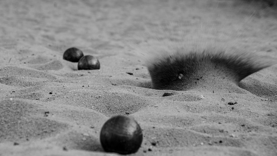 Close-up of a ball on the beach