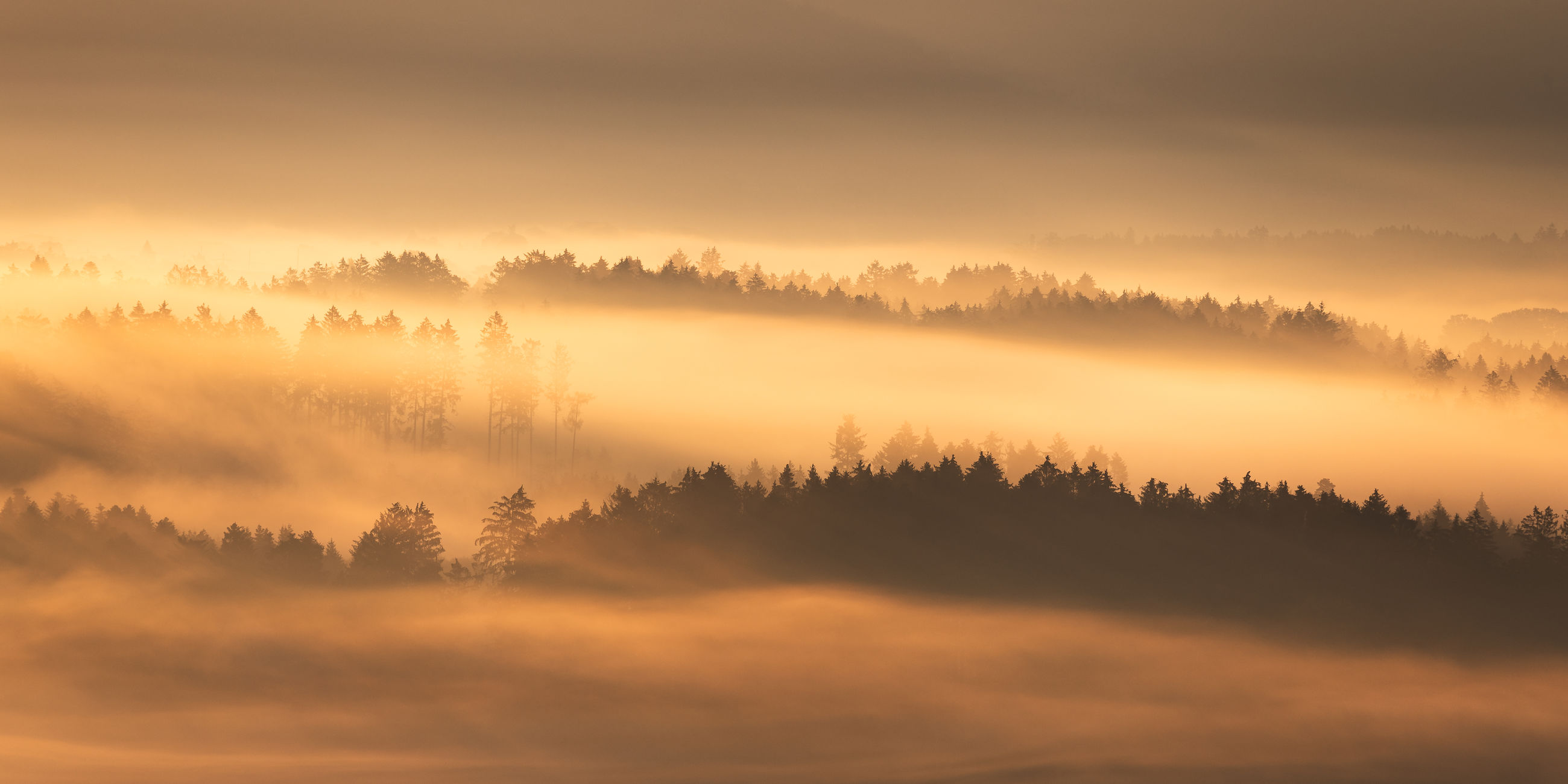 fog, environment, tree, sky, landscape, scenics - nature, beauty in nature, plant, morning, forest, nature, tranquility, mist, sunrise, sun, land, cloud, tranquil scene, dawn, sunlight, no people, twilight, woodland, idyllic, sunbeam, atmospheric mood, non-urban scene, rural scene, orange color, outdoors, silhouette, autumn, mountain, winter, light - natural phenomenon, copy space, coniferous tree, travel destinations, horizon, travel, cloudscape, dramatic sky, backgrounds, gold, cold temperature, pine tree, panoramic, summer, pinaceae, back lit, field, pine woodland, freshness, social issues, multi colored, red, vibrant color