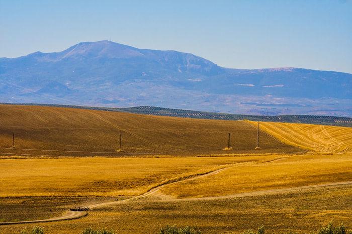 Cabras Campiña Jaen Jaen Provincia Linares Rebaño Trigales Trigo Vía Pecuaria Wheatfield Wheatfields