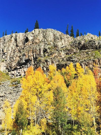 Changing Aspens Colorado Aspen Aspen Trees EyeEm Selects Nature Tree Beauty In Nature Day Rock - Object Tranquil Scene Mountain Clear Sky Outdoors Scenics Blue Tranquility Autumn No People Yellow Landscape Sky