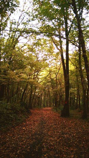 Belgrad Forest Belgrad Ormanı Istanbuldasonbahar Istanbul Turkey Autumn Sonbahar In Istanbul Forest Orman