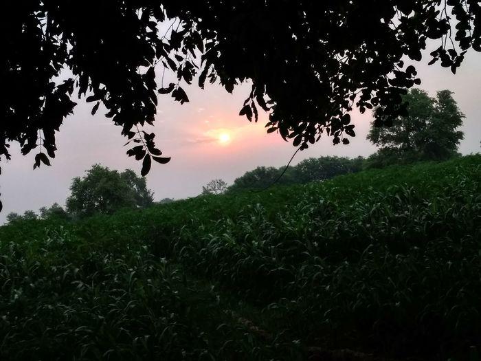 Morning Sun New