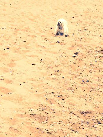 Ile D'Oleron Plage 🌴 Holidays ☀ Myprincess🐶🐶 Isis😍 Ilovemydog Relaxing Time Hello Sunshine