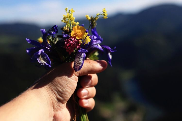 Cropped Image Of Hand Holding Fresh Flowers