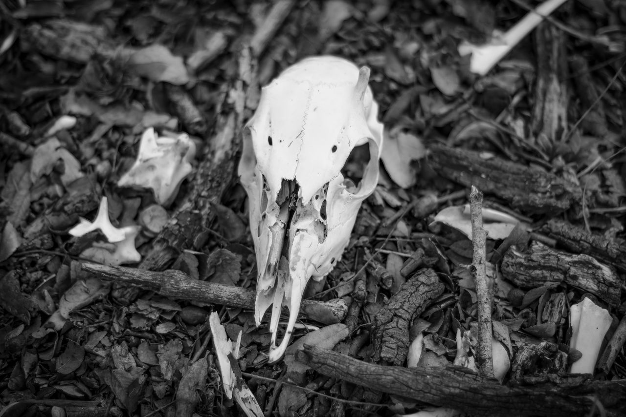 HIGH ANGLE VIEW OF ANIMAL SKULL ON WALL