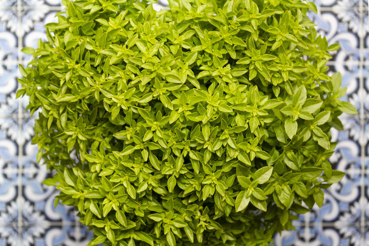 High angle view of green plant
