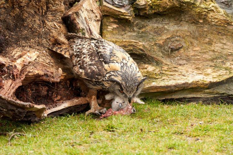Bird on rock in field