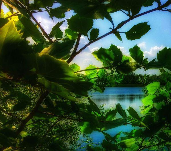 Paradise at