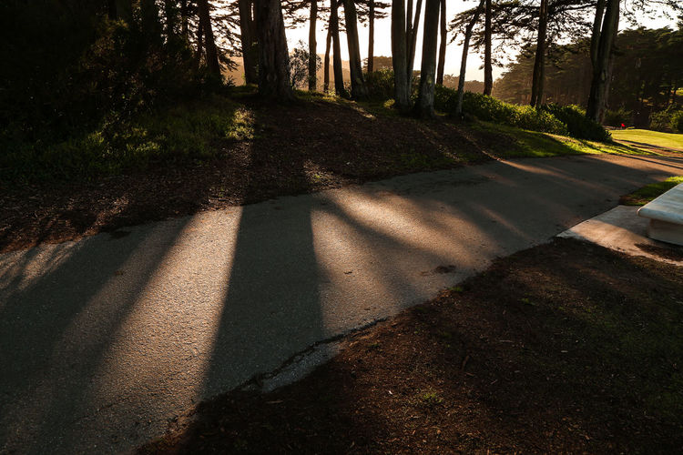 Shadow of trees on road