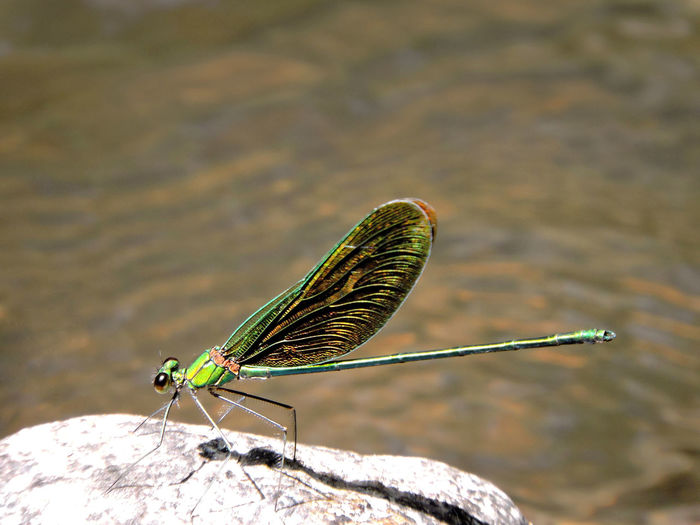 Close-up of dragonfly on rock